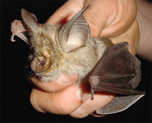 Four new horseshoe bats species discovered in East and Southern Africa