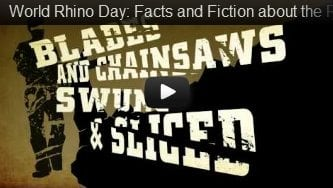 World Rhino Day: Facts and Fiction about the Rhino Horn Trade
