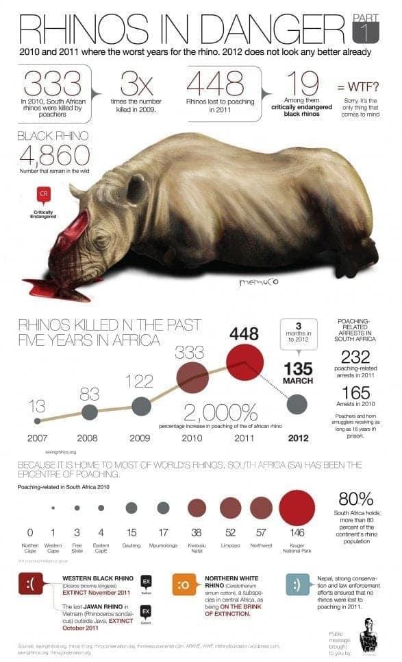 Rhinos in Danger Infographic