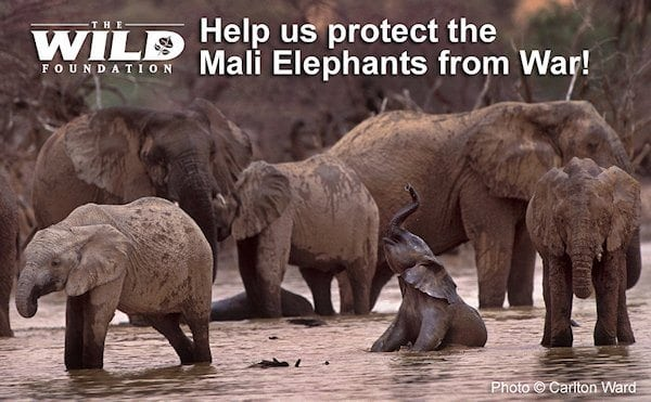 Protecting the Mali Elephants from War