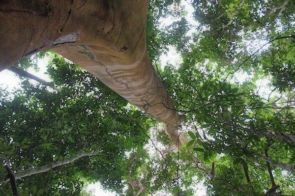 Trans-border Crime Threatens Congo Basin Biodiversity