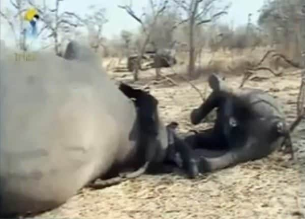 Poachers in South West Chad kill 86 elephants, including 33 pregnant females