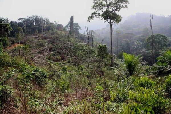Tanzania: Illegal logging rages, blamed on corruption
