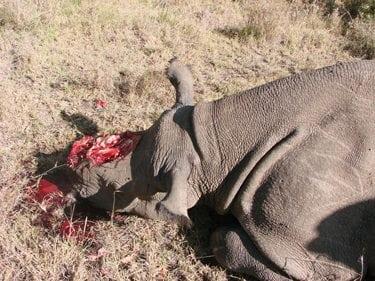 Kenya: Poachers Strike on Ol Pejeta Conservancy