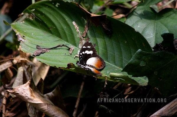 rainforest-butterfly.jpg