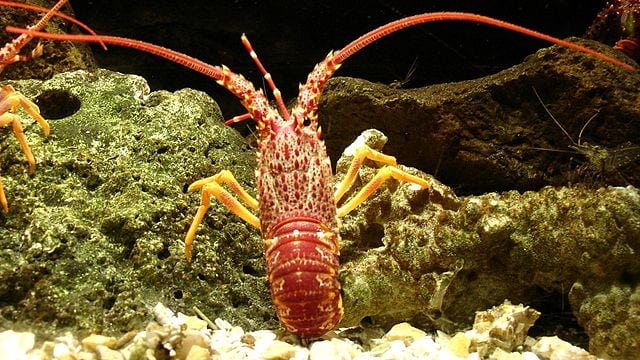South African Fisheries win major victory against lobster poaching syndicate