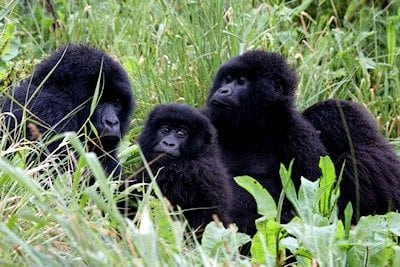 Save Virunga National Park from Oil Drilling