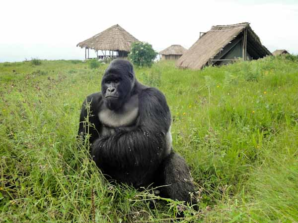 Congo's Virunga National Park Announces Partnership For Economic Revival In War-Torn Eastern Province