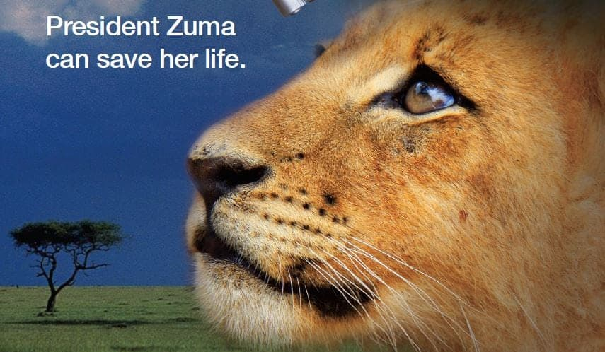 Avaaz wins Historic Court Case over Censorship in South Africa Lion Bones Campaign