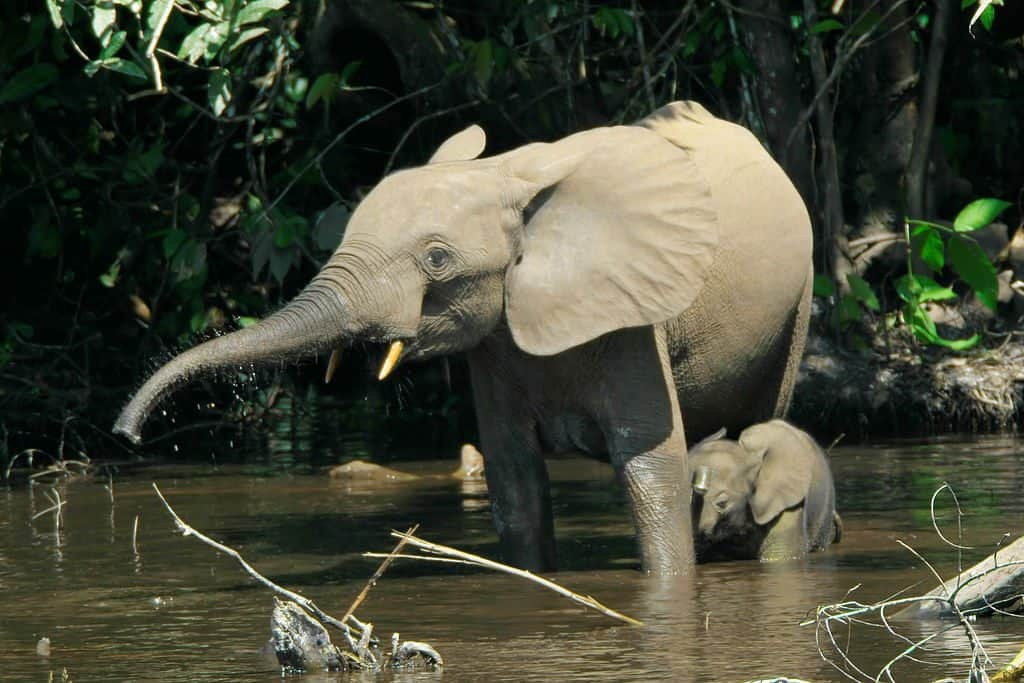 Paul G. Allen Introduces Major Initiative to Conserve African Elephant Population
