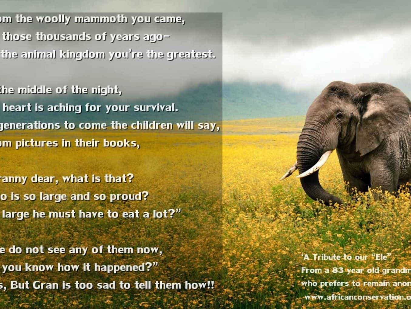 "'A Tribute to our ""Ele"" with a mug of coffee at my elbow' - Elephant Poem"