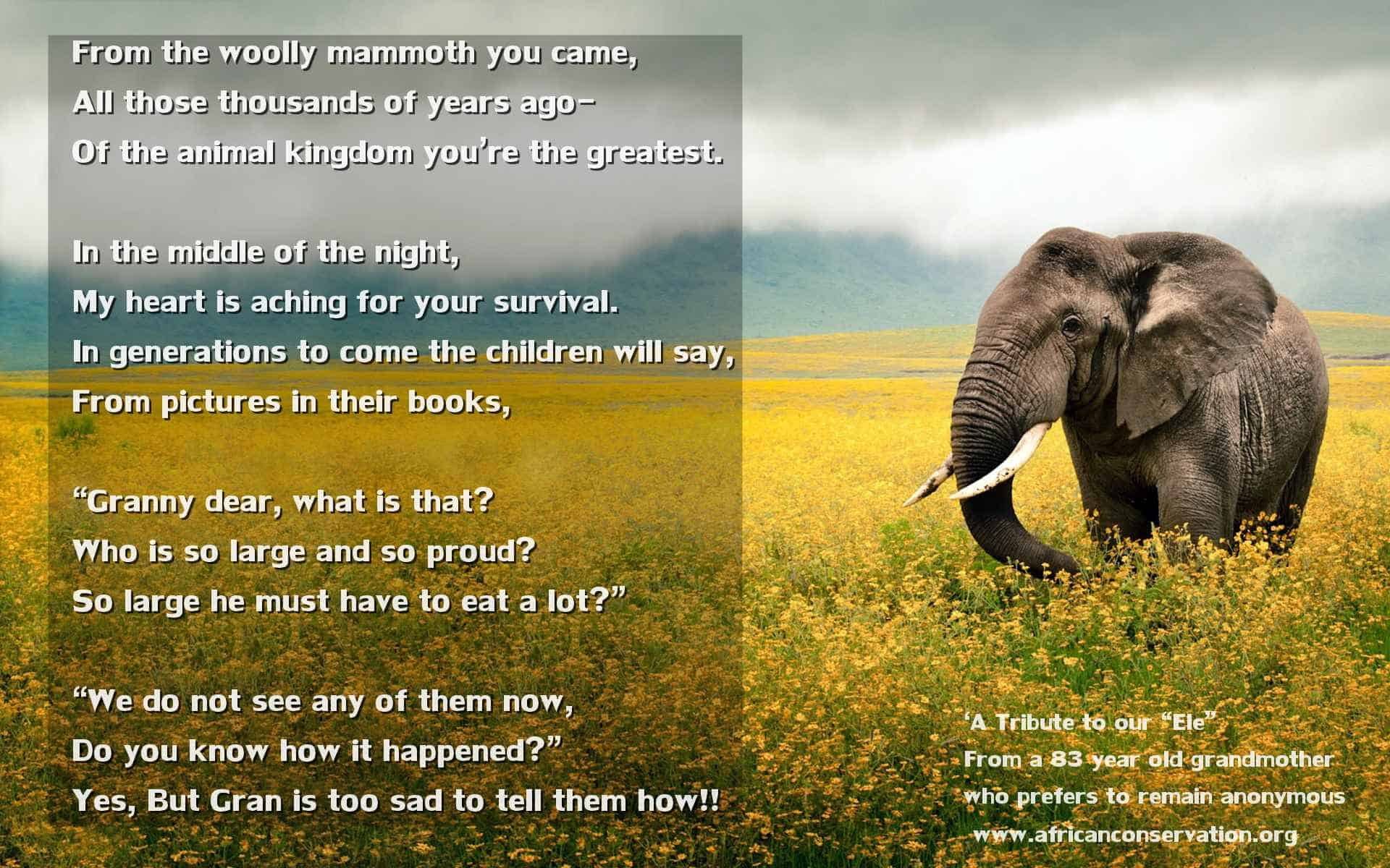 "'A Tribute to our ""Ele"" with a mug of coffee at my elbow' – Elephant Poem"
