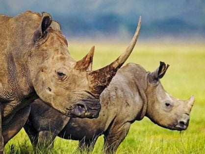 Kenyan Wildlife Protection Initiative 'Walk With Rangers' to Present Petition Against Planned Rhino Hunt Signed by Rangers and Conservationists