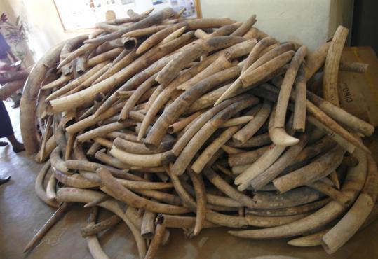 International wildlife trafficking top of Malawi agenda