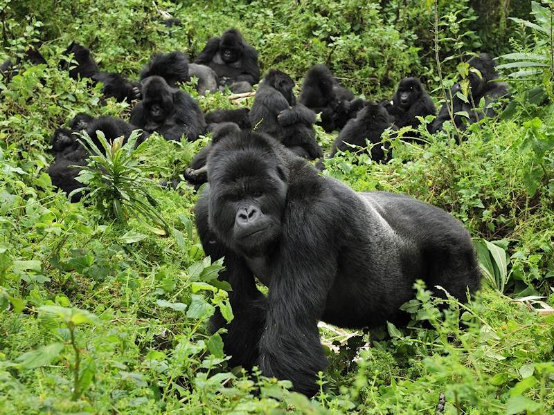 Local communities living in and around Virunga National Park, DR Congo, speak out against oil exploration