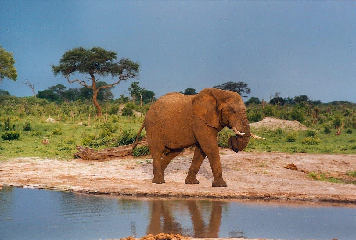 Zimbabwe land grabs put Presidential Elephants in danger