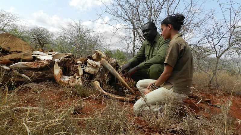 Raabia watches over an elephant carcass in despair with Eric Sagwe of Wildlife Works