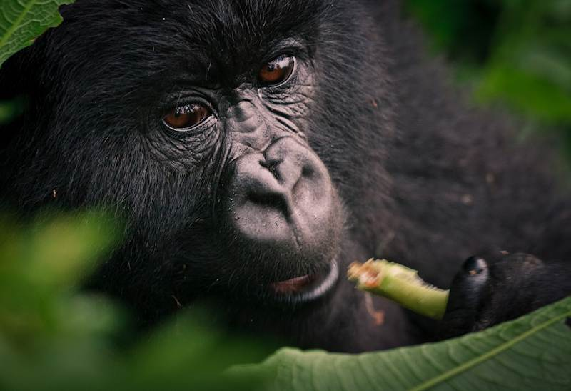 Virunga still under siege: Oil disaster looming for Africa's Oldest National Park