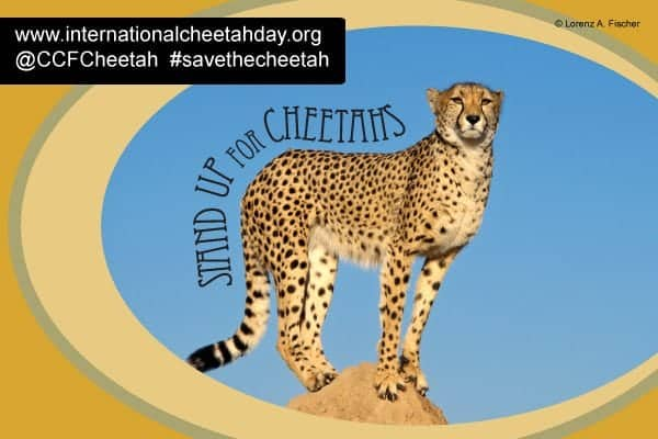Join the International Cheetah Day Celebration on December 4, 2014