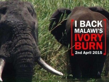 IAN REDMOND COMMENDS MALAWI'S IVORY BURN ANNOUNCEMENT
