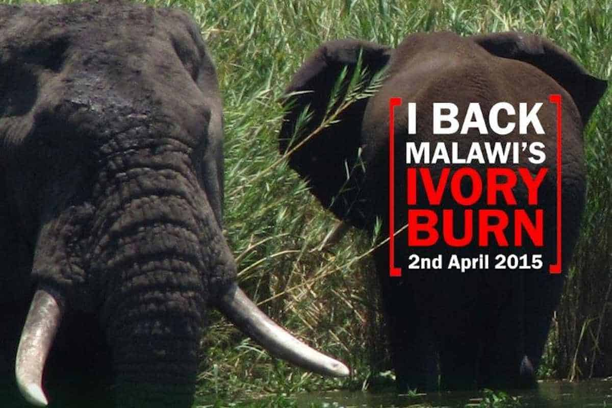 IAN REDMOND COMMENDS MALAWI'S IVORY BURN ANNOUNCEMENT