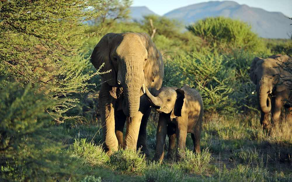Evidence from ivory DNA identifies two main elephant poaching hotspots