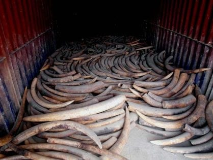 Malawi: Another Ivory Burn Postponed