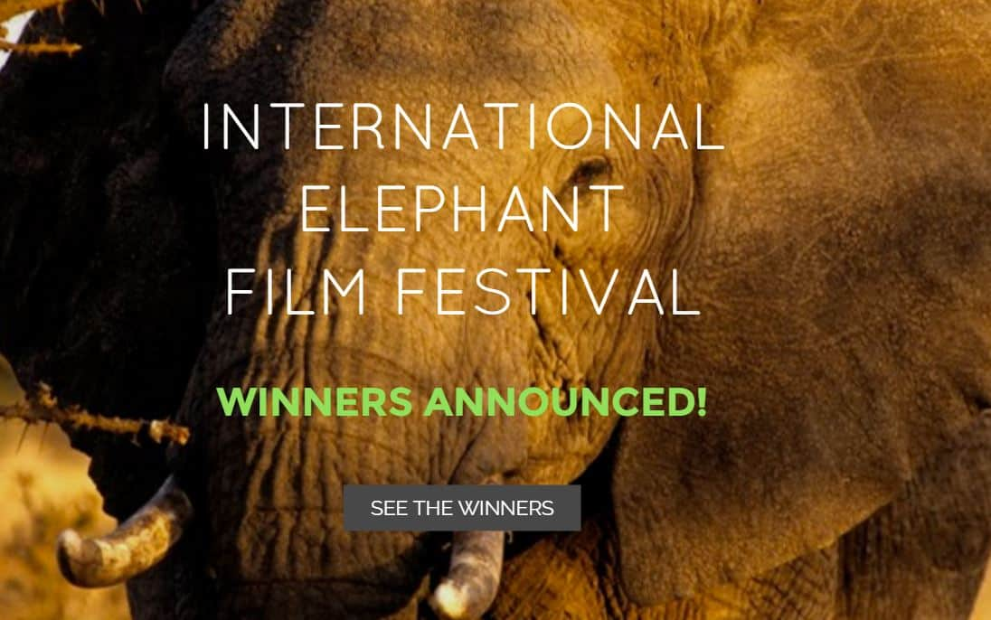 International Elephant Film Festival Winners announced at UN Headquarters on World Wildlife Day