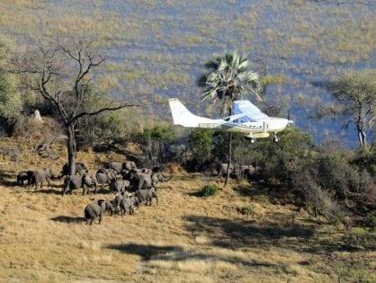 Great Elephant Census Reveals Massive Population Decline in African Savanna Elephants