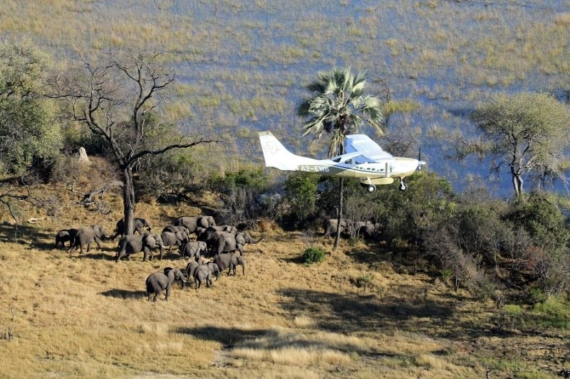 Great Elephant Census Reveals Massive Population Decline in African Savanna Elephants