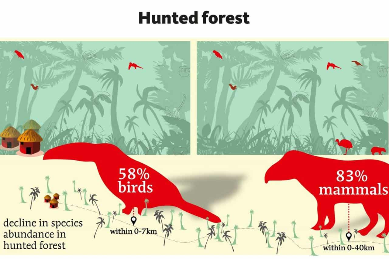 Hunting responsible for sharp decline in tropical wildlife and birds with 83% and 58%
