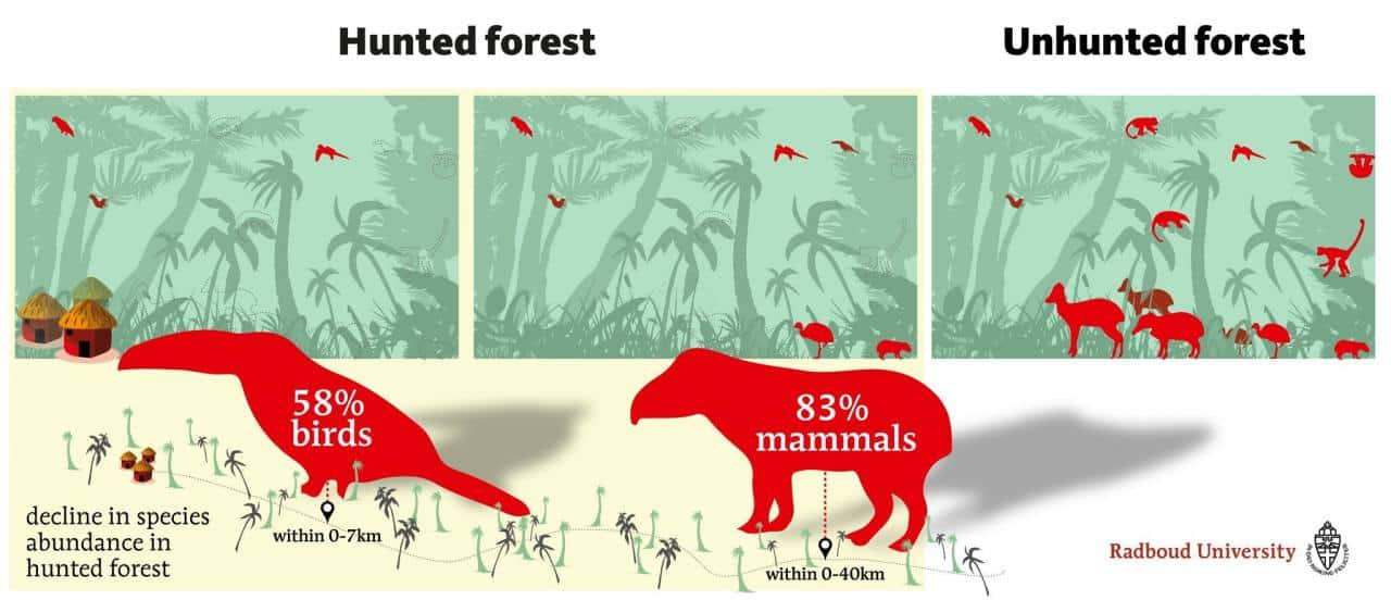 Impact of hunting on mammals and bird species