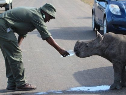 Rhino Conservation Awards 2017 Nominations Are Open