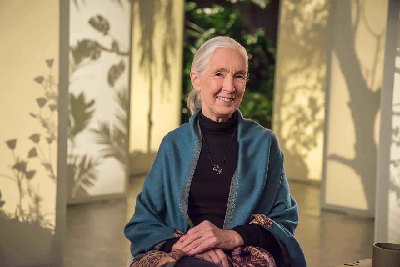 Learn from the legendary naturalist Dr. Jane Goodall in her first ever online class teaching conservation