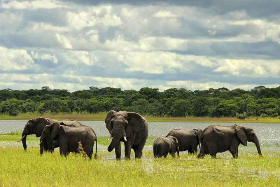 Elephants in kasungu
