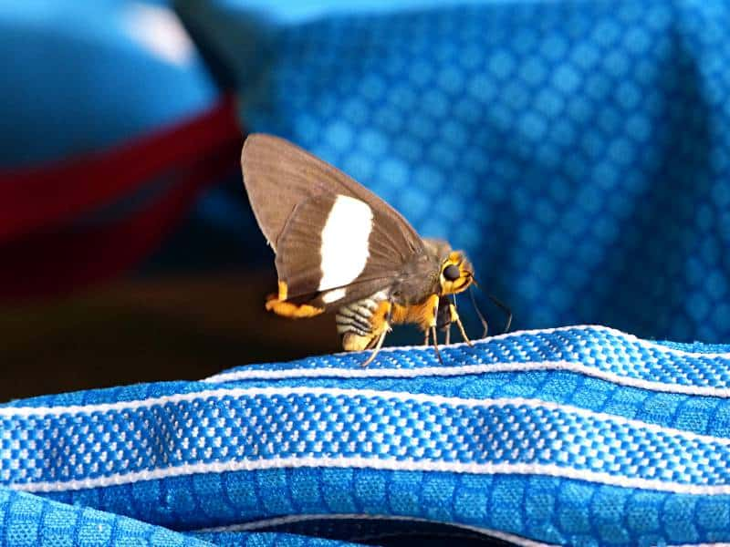 butterfly-cameroon-2