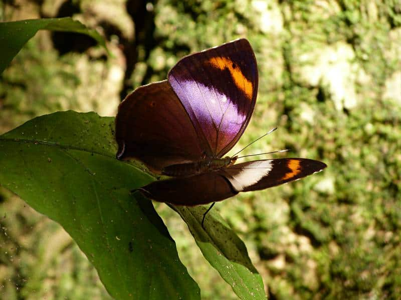 butterfly-cameroon-4