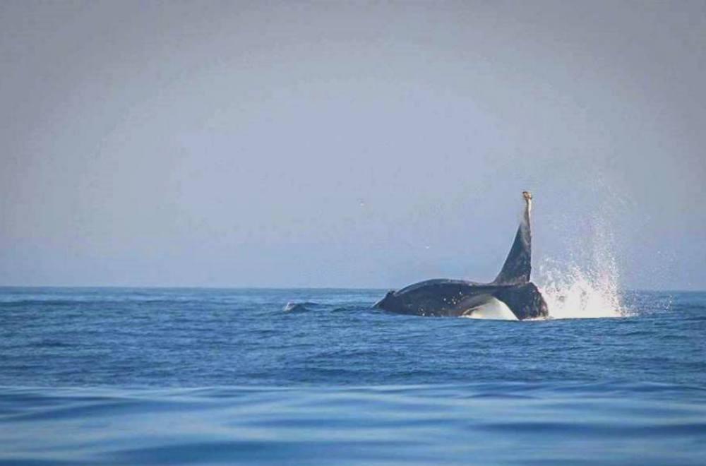 coastalwhale