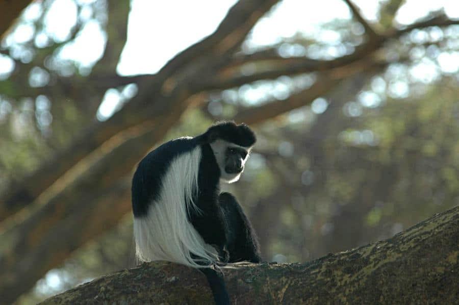 Primate Rescue in a Tropical Beach Paradise