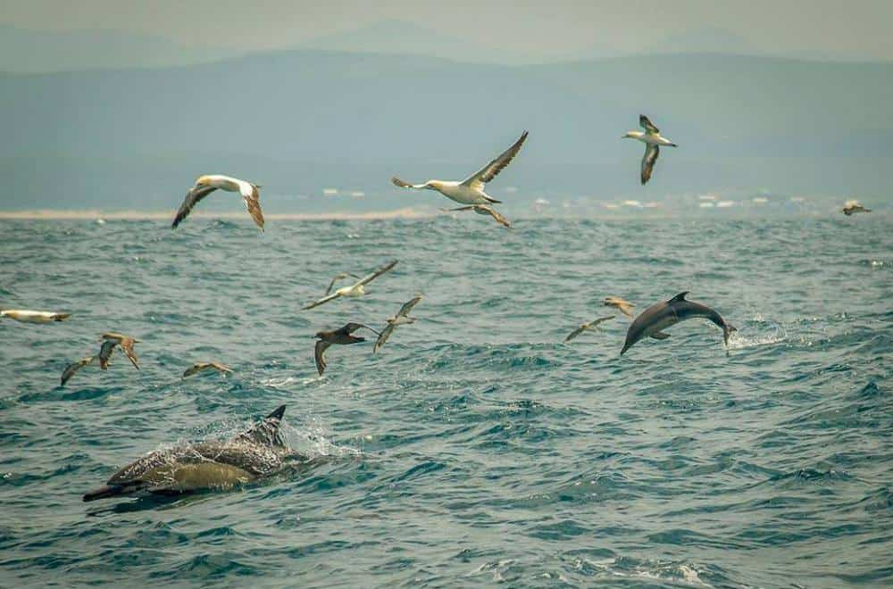 dolphins and birds