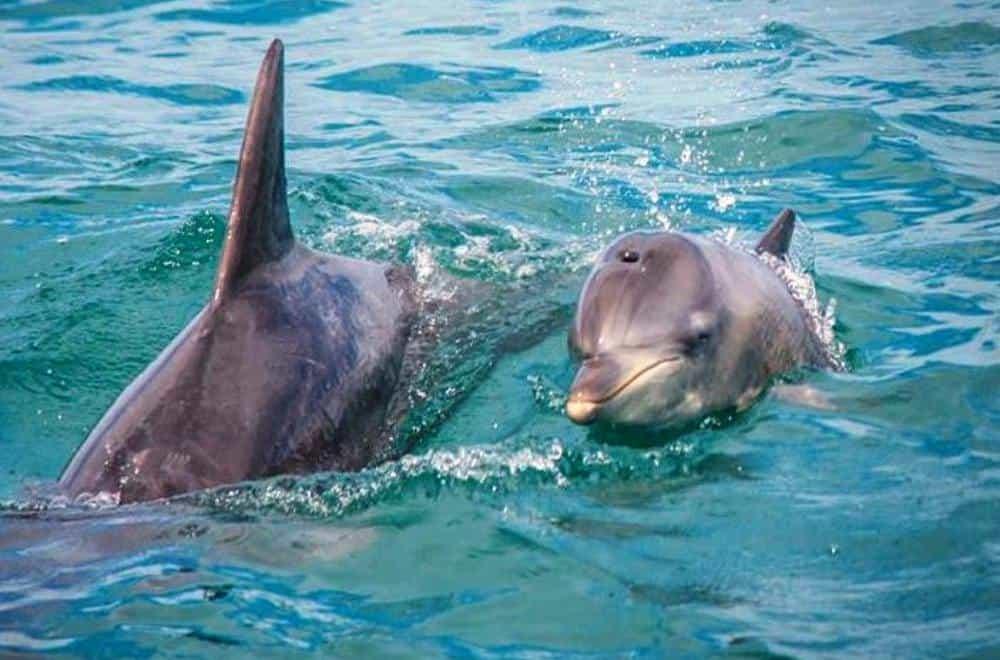 dolphinvolunteer2