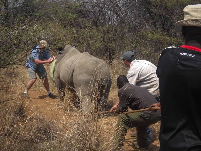 Volunteer at a Wildlife Reserve in Botswana