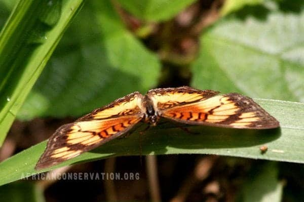 resting-butterfly