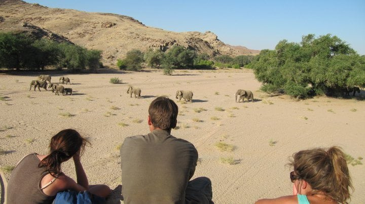 vols and elephants