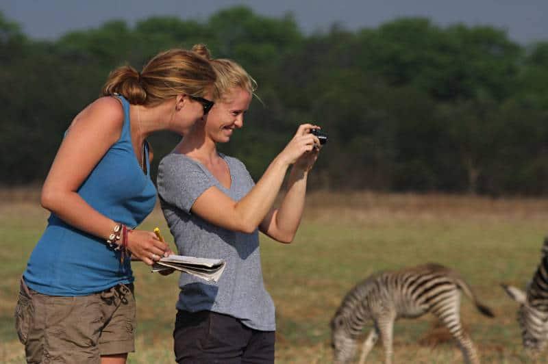 Wildlife Rescue & Animal Caretaking at a Wildlife Centre