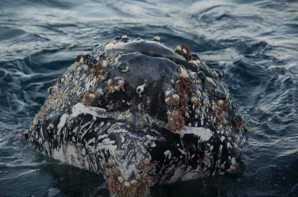 whale close