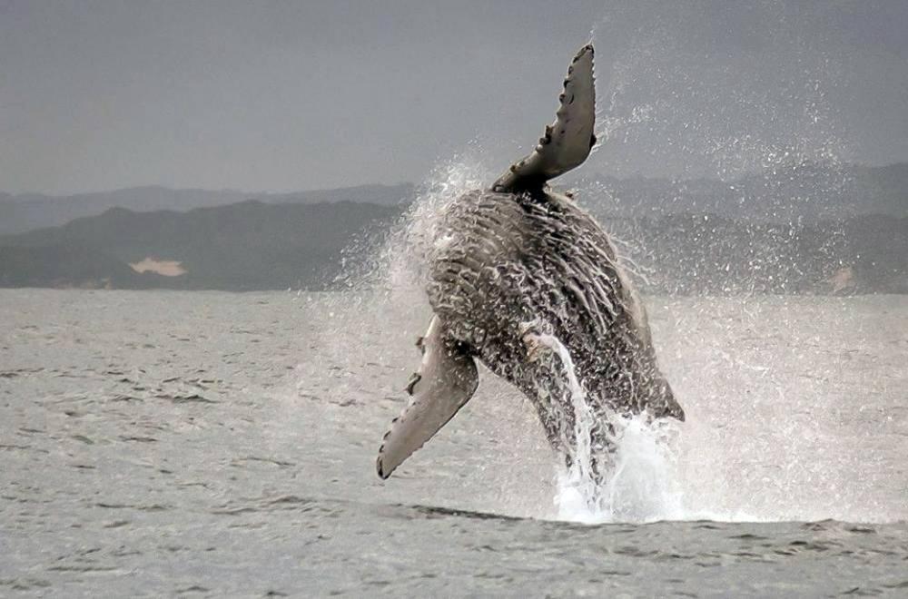 whale jump 3