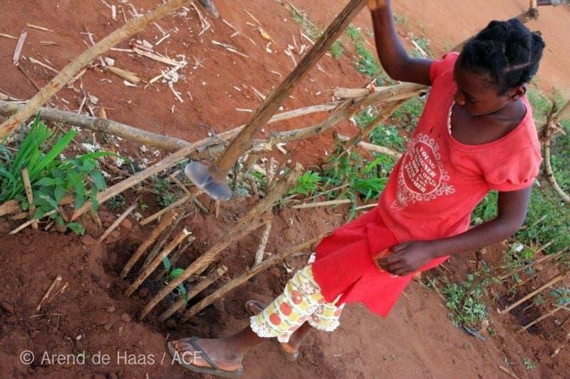 tree-planting-reforestation_IMG_1528