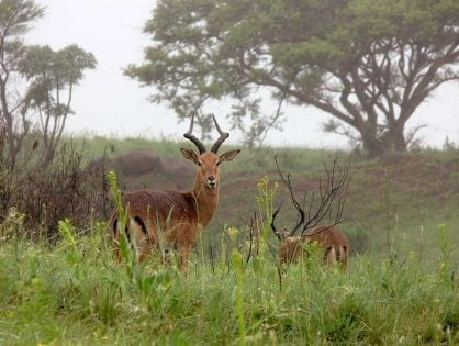 New research questions assumptions about bushmeat hunting in the Global South