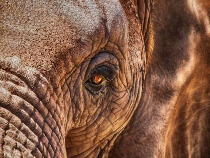 Malawi's Wildlife Crime JusticeProgramme Produces Record Results